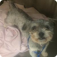 Adopt A Pet :: Joey - Oak Ridge, NJ