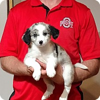 Adopt A Pet :: Lucky - South Euclid, OH
