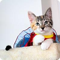 Adopt A Pet :: Hermione - Los Angeles, CA