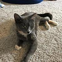 Adopt A Pet :: Luna - Athens, GA