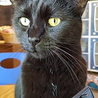 Adopt A Pet :: Rowan - playful! - Salisbury, MA