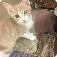 Adopt A Pet :: Ella - Marina del Rey, CA