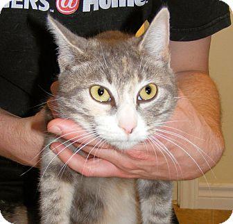 Calico Cat for adoption in SYDNEY, Nova Scotia - Avril