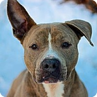 Adopt A Pet :: Zeus - Port Washington, NY