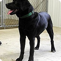 Adopt A Pet :: Teddy - Centerpoint, IN