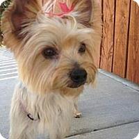 Adopt A Pet :: Roxy - Goodyear, AZ