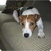Adopt A Pet :: Tucker - Omaha, NE