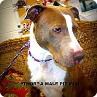 Adopt A Pet :: Thor - Gadsden, AL