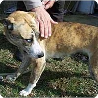 Adopt A Pet :: Blue Eyes - Belleville, MI