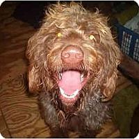 Adopt A Pet :: Sadie - North Jackson, OH