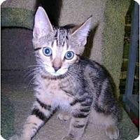 Adopt A Pet :: Kirplop - Mission, BC