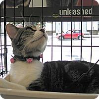 Adopt A Pet :: Fiona - Santa Monica, CA