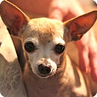 Adopt A Pet :: Tiny - Sacramento, CA