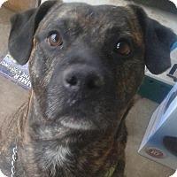 Adopt A Pet :: Blade - Northumberland, ON