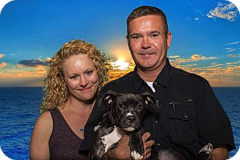American Staffordshire Terrier Mix Puppy for adoption in Livonia, Michigan - Snow White - Adopted 08/15/201