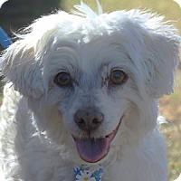 Adopt A Pet :: Truman - La Costa, CA