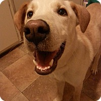Adopt A Pet :: Cadet - Lewisville, IN