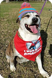 Terrier (Unknown Type, Medium)/Labrador Retriever Mix Dog for adoption in Simsbury, Connecticut - Deputy Dawg