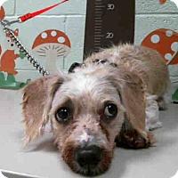 Adopt A Pet :: Marley - North Bend, WA