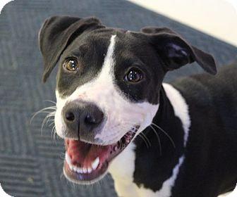 Pointer Mix Puppy for adoption in Claremore, Oklahoma - Oreo