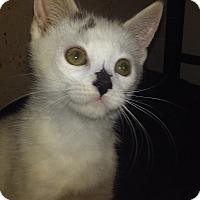 Adopt A Pet :: Ned - Columbus, OH