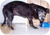 Terrier (Unknown Type, Medium) Mix Dog for adoption in Metairie, Louisiana - Rosie