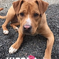 Adopt A Pet :: Will - Grantville, PA