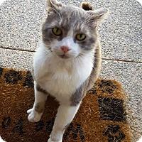 Adopt A Pet :: Marvin - Orange, CA
