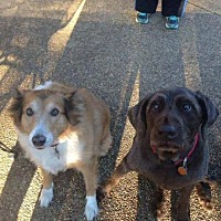 Adopt A Pet :: Missy & Mollie (Courtesy Post) - Nesbit, MS