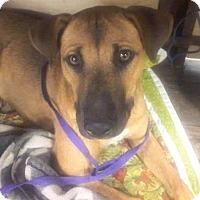 Adopt A Pet :: Lula - Phoenix, AZ