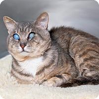 Adopt A Pet :: Stevie - Coronado, CA