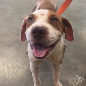 Shar Pei Mix Dog for adoption in Kenedy, Texas - Gucci