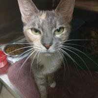 Adopt A Pet :: Armona - Columbia, SC