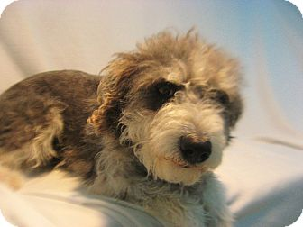 Terrier (Unknown Type, Small) Mix Dog for adoption in Scottsbluff, Nebraska - Trudy
