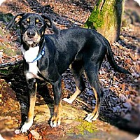 Adopt A Pet :: Danica - Hastings, NY