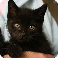 Adopt A Pet :: Morningstar - Canoga Park, CA