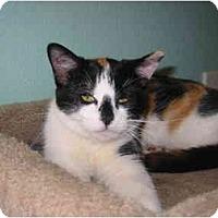 Adopt A Pet :: Bozo - Amarillo, TX