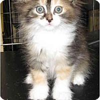 Adopt A Pet :: Cali - Catasauqua, PA