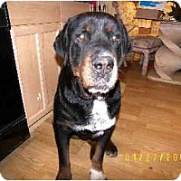 Adopt A Pet :: PeeWee - Scottsdale, AZ