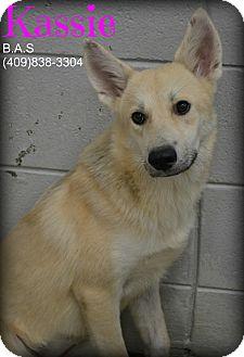 German Shepherd Dog Mix Dog for adoption in Beaumont, Texas - Kassie
