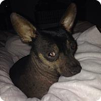 Adopt A Pet :: Edgar Allen Poe - Los Angeles, CA