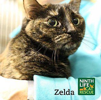 Domestic Shorthair Cat for adoption in Oakville, Ontario - Zelda
