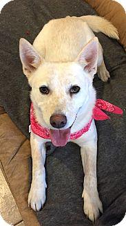 Australian Cattle Dog Mix Dog for adoption in Pilot Point, Texas - SYDNEY