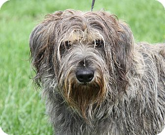 Terrier (Unknown Type, Medium) Mix Dog for adoption in Marietta, Ohio - Taco Belle