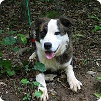 Adopt A Pet :: Bandit - Randleman, NC