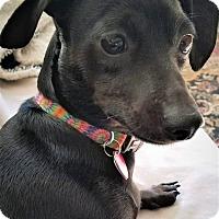 Adopt A Pet :: Flora - Decatur, GA