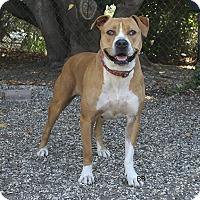 Adopt A Pet :: Abagail - Santa Barbara, CA