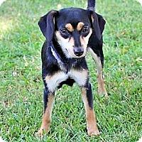 Adopt A Pet :: MONA - Washington, DC