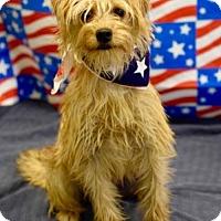 Adopt A Pet :: Sunshine - Modesto, CA