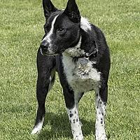 Adopt A Pet :: Hank - McKenna, WA